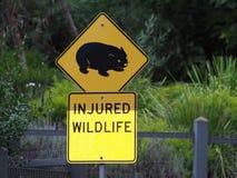 Verkehrszeichen Vombatus-ursinus - allgemeines Wombat in der tasmanischen Landschaft stockfotos