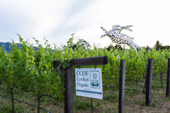 Verklaarde Organische wijnen Stock Foto's