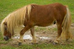Verklein paard het lopen stock foto's