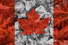 Verklig bladKanada flagga - selektiv färg royaltyfri fotografi