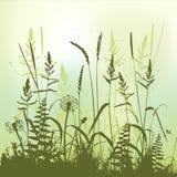 Verklig gräskontur, äng under sommartid Royaltyfri Foto