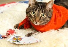 Verklig hasardspelare som spelar poker fotografering för bildbyråer