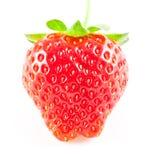 Verklig jordgubbe Royaltyfri Foto