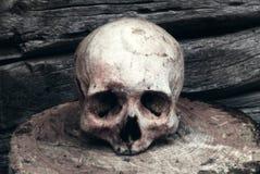 Verklig mänsklig skalle på bakgrunden av en trävägg Arkivfoton