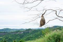 Verklig tom sikt för fågelredeberg Fotografering för Bildbyråer