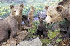 Verklig välfylld björn Royaltyfri Foto