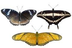 Verkliga fjärilar avskiljer på vit bakgrund - uppsättning 03 Arkivbild