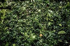 Verkliga tropiska gröna tjänstledigheter i skogen arkivbild
