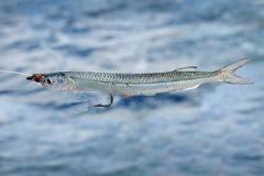 Verkligt fiskbete Fotografering för Bildbyråer