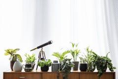 Verkligt foto av växterna och ett teleskopanseende på en träcu royaltyfri fotografi