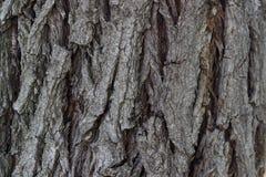 Verkligt gammalt träd för bakgrund som utföra i relief med detaljer arkivbilder
