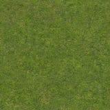 verkligt gräs Arkivfoto
