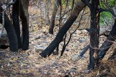 Verkohlte Bäume Lizenzfreies Stockbild