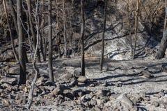 Verkohlte Bäume, die einem Waldbrand in Troodos, Zypern folgen Stockbilder