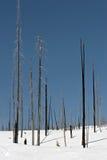 Verkohlte Bäume im Schnee Stockfotos