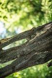 verkohlter Baum mit einem Loch Lizenzfreie Stockfotografie