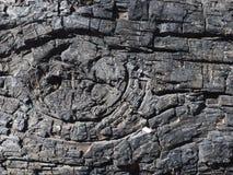 Verkoold detail van boomboomstam, zwarte kleurentextuur van een boomachtergrond stock foto