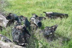 Verkoold hout op groen gras royalty-vrije stock foto