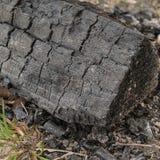 Verkoold logboek, Brightling, East Sussex, het UK royalty-vrije stock foto's