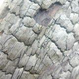 Verkoold stuk van hout stock foto's