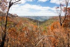 Verkoolde bomen in Blauwe Bergen Australië Stock Foto
