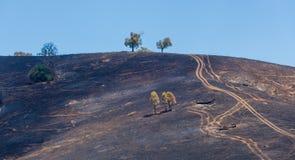 Verkoolde heuvels na een geplande brandwond stock afbeeldingen