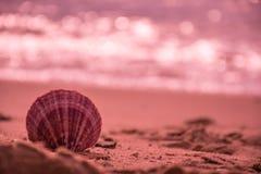 verkoop op het strand royalty-vrije stock afbeelding