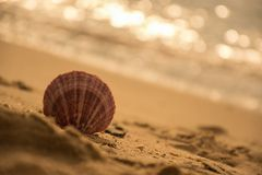 verkoop op het strand stock foto's