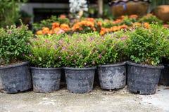 Verkoop van tuinbloemen in potten royalty-vrije stock afbeelding