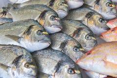 Verkoop van vissen op de markt royalty-vrije stock afbeelding