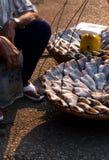 Verkoper die traditionele droge vissen zonder hoofd Nile Tilapia bij lokale markt in Sattahip, Thailand verkopen Royalty-vrije Stock Fotografie