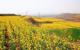 Verkrachtingsbloem in Luoyang Li Lou royalty-vrije stock foto