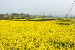 Verkrachtingsbloemen Stock Foto's