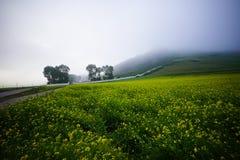 Verkrachtingsbloemen - miljoen hectaren de schoonheid van verkrachtingsbloemen stock foto's