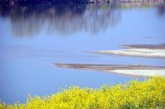 Verkrachtingsbloesems op de rivieroever/het Japanse landschap in Maart Royalty-vrije Stock Afbeelding