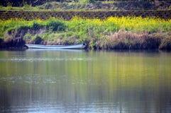 Verkrachtingsbloesems op de rivieroever/het Japanse landschap in Maart Royalty-vrije Stock Foto