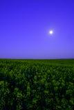 Verkrachtingsgebied bij nacht Royalty-vrije Stock Fotografie