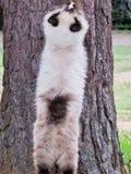 Verkratzen von Greifern auf Baum lizenzfreie stockbilder