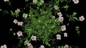verlässt üppiges Blumenblatt der Blume 4k Ernten Sträuche Buschbetriebsgras wachsender Hintergrund stock video