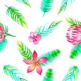 Verlässt nette nahtlose Mustertapete des Sommerstrandes des tropischen Grüns Dschungel romantische mit Blumenelemente Protea und Stockbilder