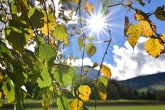 Verlässt von einem Baum, durch den die Sonne glänzend ist Stockfotos