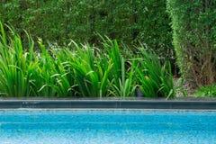 Verlaat het drijven in de pool met een aardige boombezinning weg in de hoek Het de herfst en dat ` s van ` s het seizoen wanneer  Royalty-vrije Stock Foto