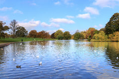 Verlamium park zdjęcia royalty free