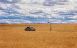 Verlassen auf einem Weizen-Gebiet Lizenzfreies Stockfoto