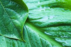 Verlassen Sie auf nassem Grün Stockbild