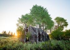 Verlassen Sie Blockhaus, das mit Bäumen überwuchert gewesen ist Stockbilder