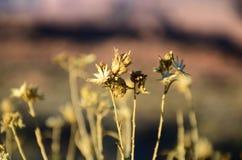 Verlassen Sie Blume in der Kehre in der Seite, Arizona Stockfotografie