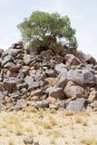 Verlassen Sie den Baum, der auf einem Berg von Felsen - Porträt wächst Lizenzfreies Stockfoto