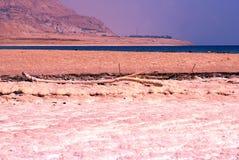 Verlassen Sie in Israel auf dem Bereich des Toten Meers Stockfotografie