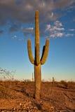 Verlassen Sie Kaktus Lizenzfreie Stockfotografie